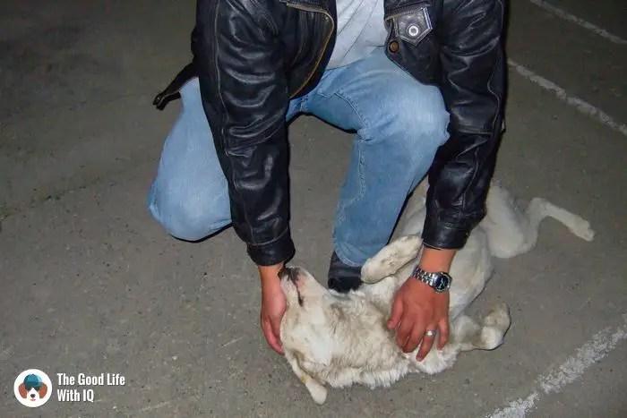 Mulbek - Cute doggies we've met on our travels