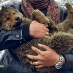 Doggies we've met on our travels - header
