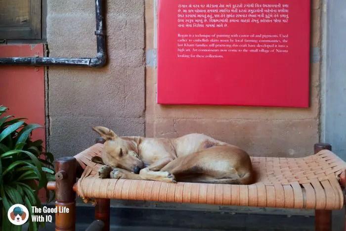 Bhuj - Cute doggies we've met on our travels