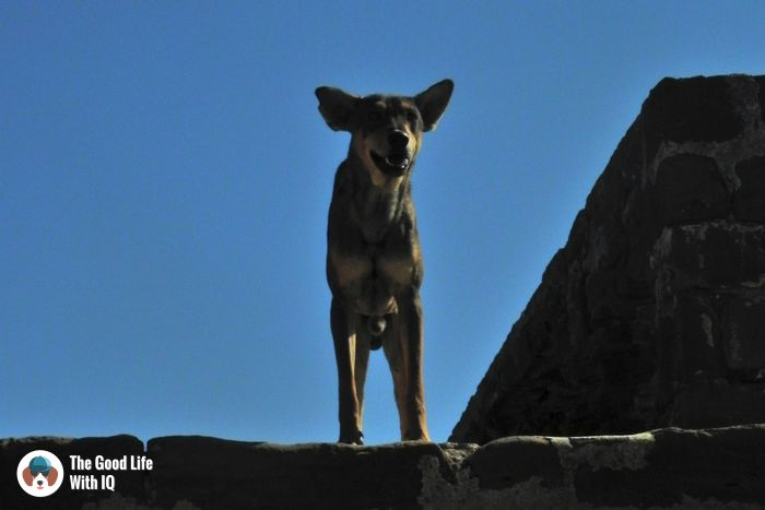 Lakhpat Fort - Cute doggies we've met on our travels