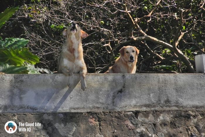 Seychelles - Cute doggies we've met on our travels