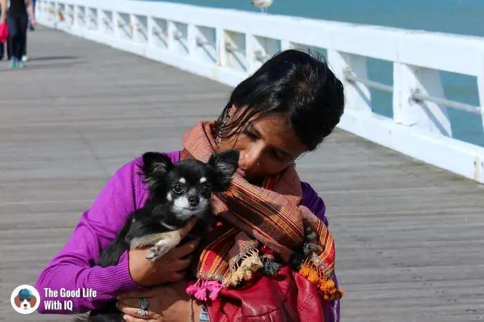 Nieuwpoort - Cute doggies we've met  on our travels