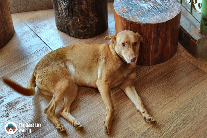 Coonoor - Cute doggies we've met on our travels