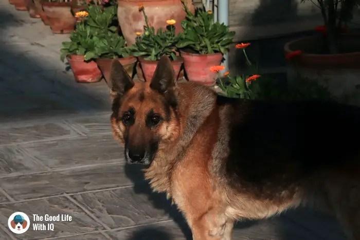 Indsu home, Kathmandu - Cute doggies we've met on our travels
