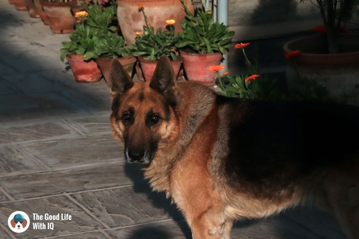 Indsu home, Kathmandu - Cute doggies we've met on our travels