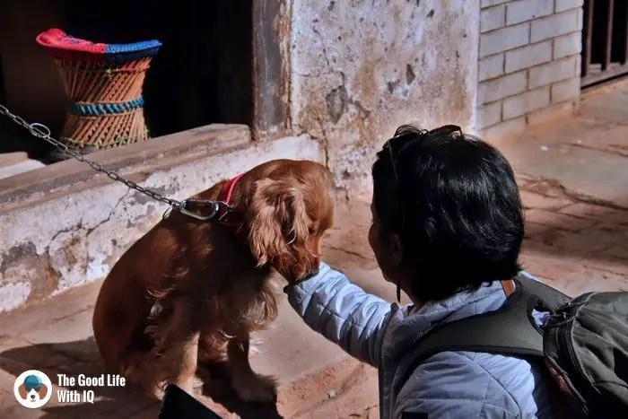 Doggie in Bhaktapur