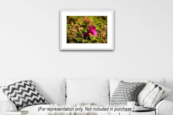 Fallen bougainvilea flower