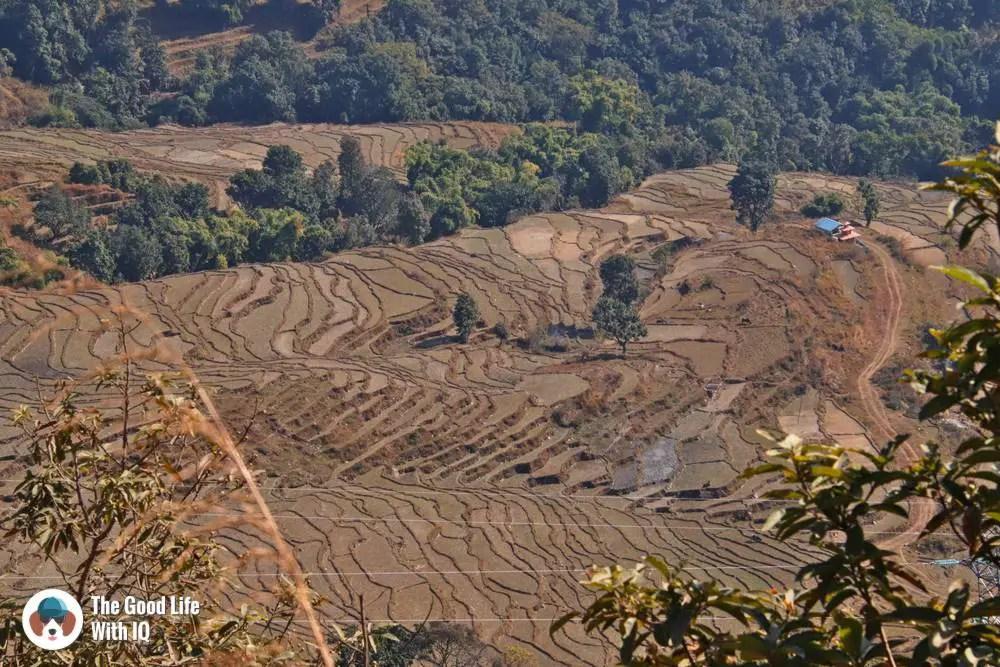 Rice fields in Rupakot, Nepal