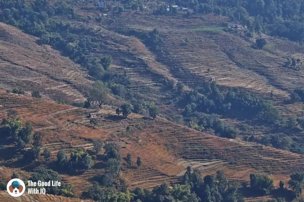 Rupakot rice fields