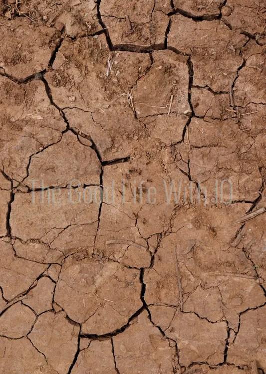 Ants on cracked soil in Thanjavur, India
