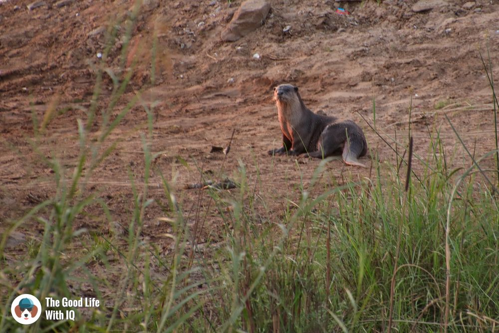 River otter - Hyderabad to Hampi road trip