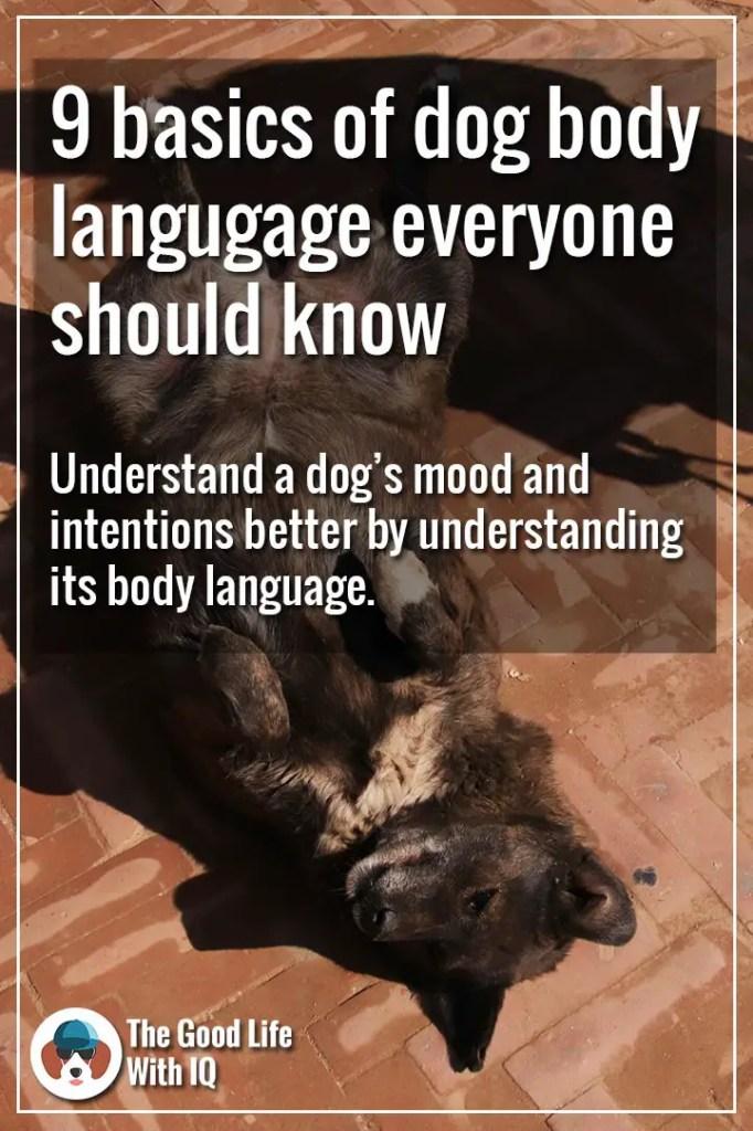 Basics of dog body language - Pinterest thumbnail