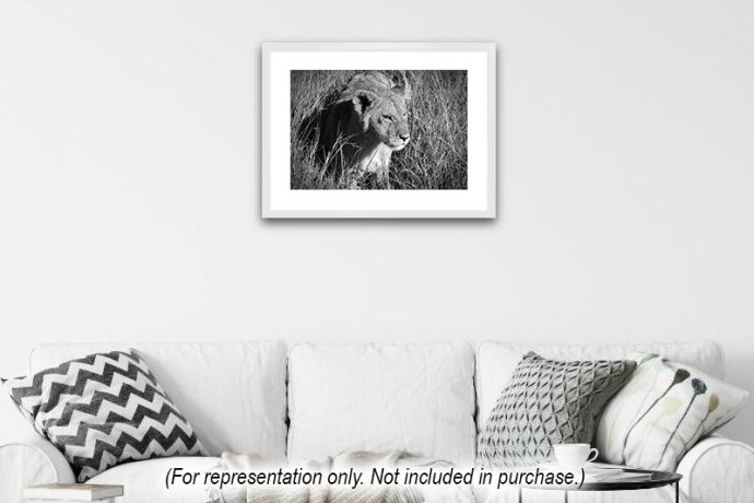 Half-grown lion cub in Masai Mara, Kenya, Africa