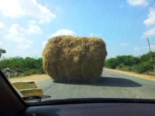 A mobile haystack (there's a tractor under there, somewhere)