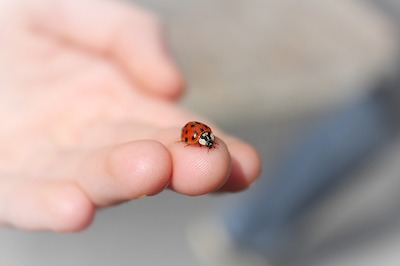 Lucky if ladybird lands on you