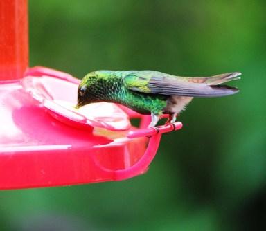 Hummingbird Pause