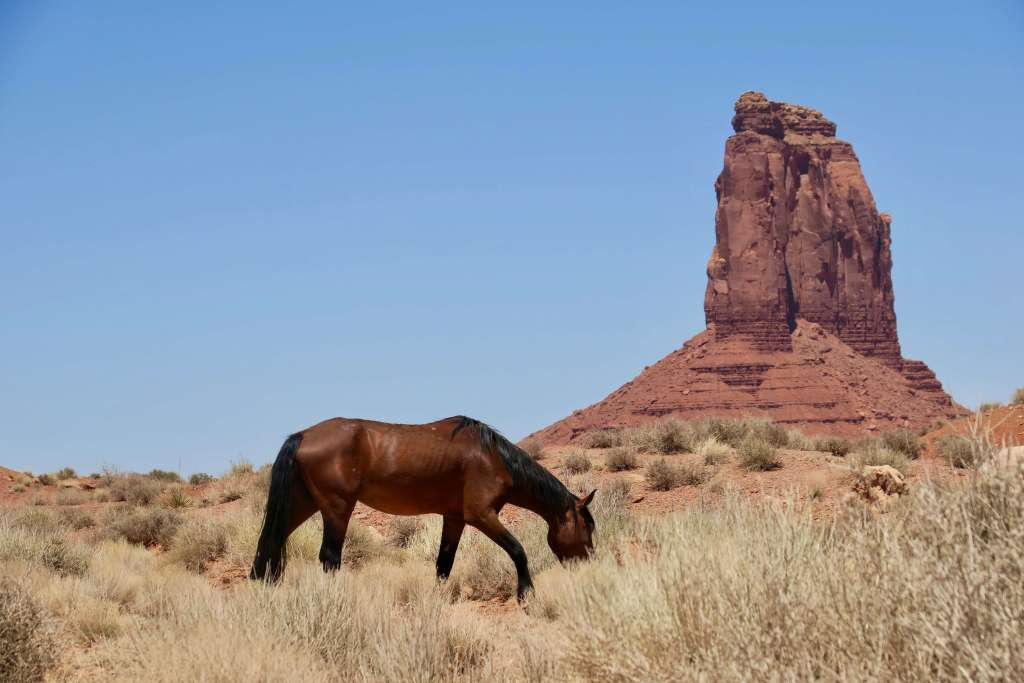 wild horse Monument Valley