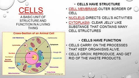 cells need a chill body