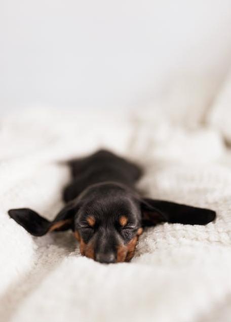 Sleep little puppy dog