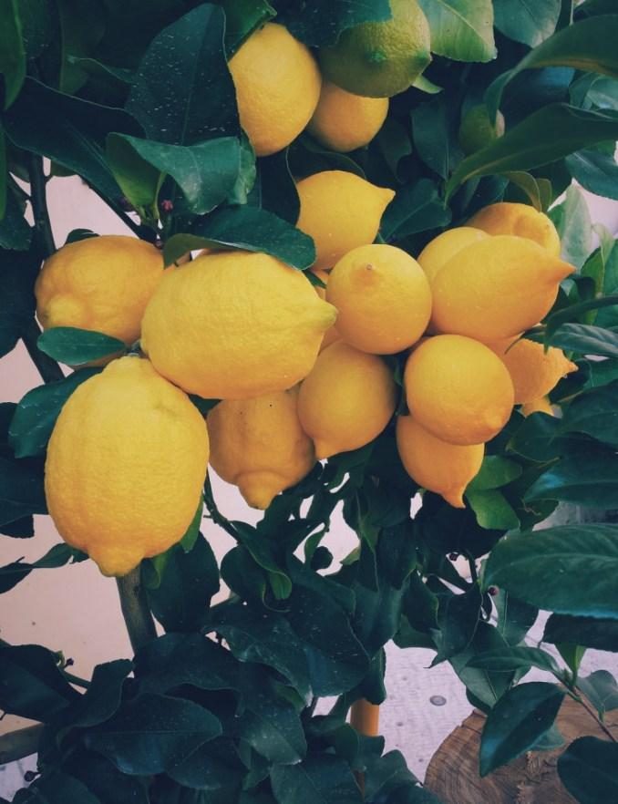 Lemons make juice