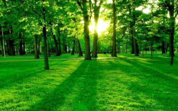 Contoh Teks Eksposisi tentang Lingkungan