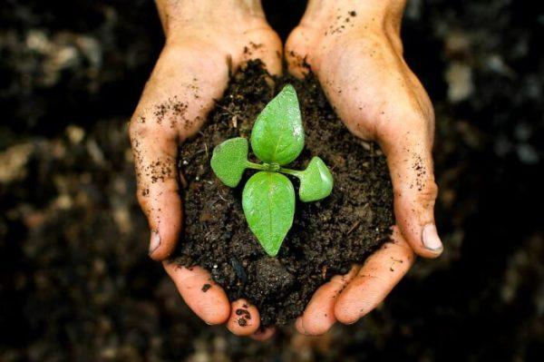 Cara Menanggulangi Pencemaran Tanah