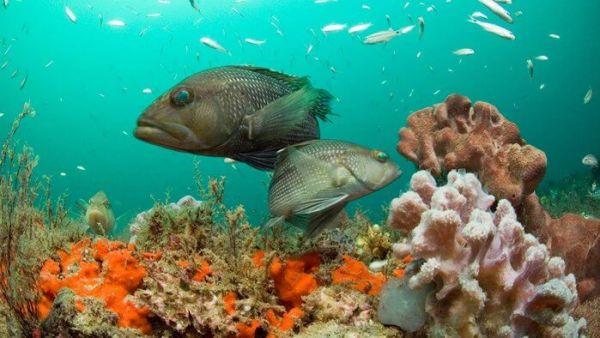 Ekosistem Laut