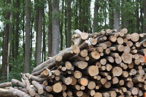 Sumber Energi Alternatif Biomassa
