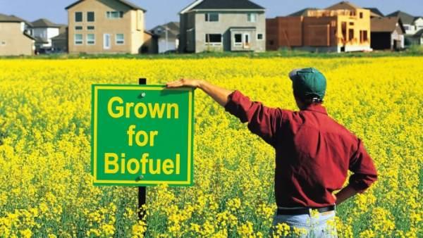 Sumber Energi Alternatif Biofuel