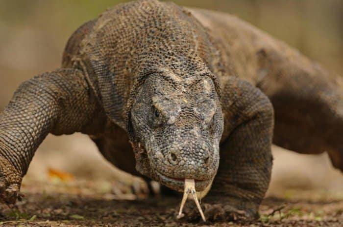Fauna di Wilayah Indonesia Tengah