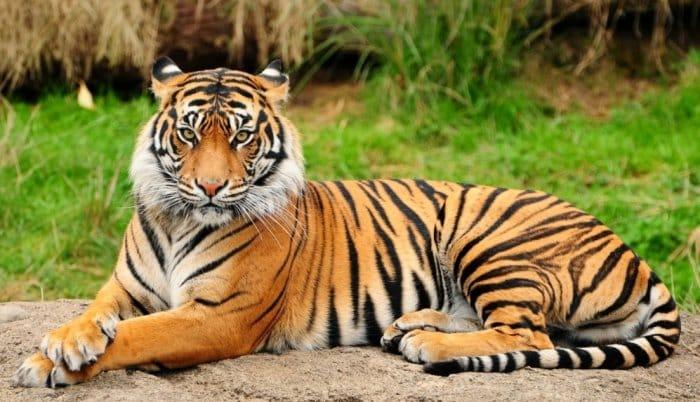 Cerita Fabel Kuda yang Memakai Kulit Harimau