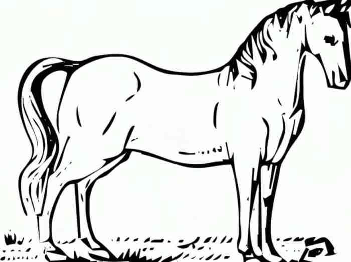 Gambar Sketsa Kuda