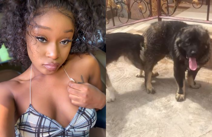 Efia Odo's Dog Just Lost Its Virginity─And It's News Because It Has Finally Joined Efia In The Bonking Game