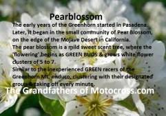 1964 Greenhorn z43 Pearblossom flower