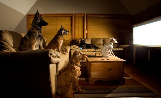 DogsTV