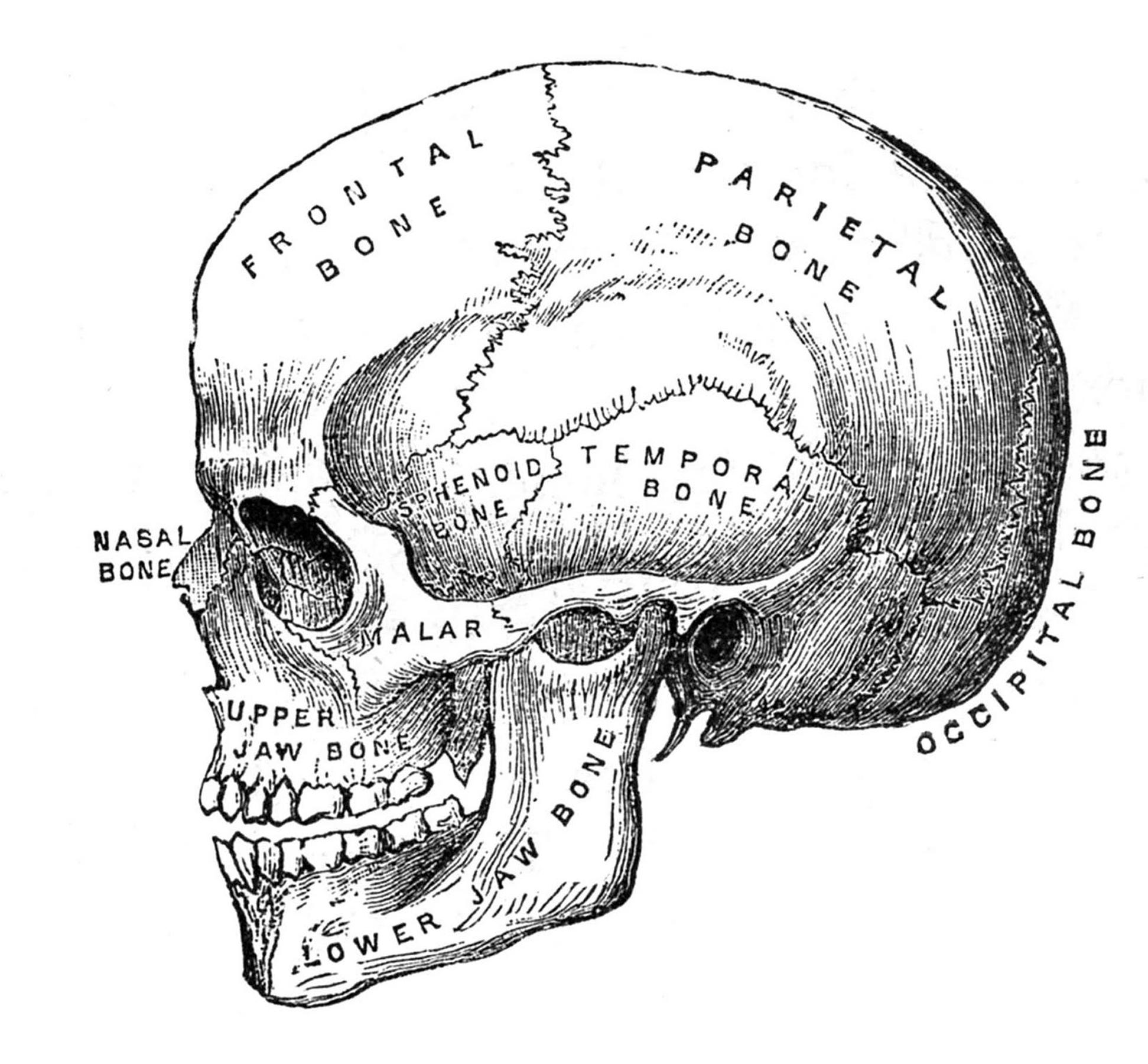 6 Skull Images