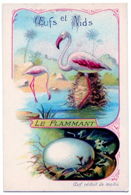 Vintage Graphic Image French Flamingos Amp Egg The