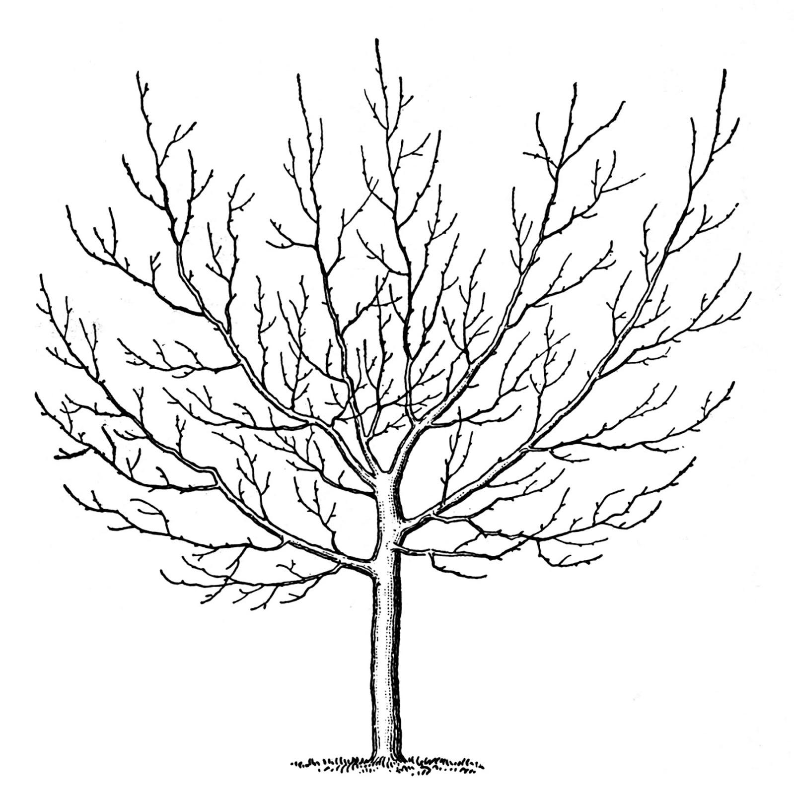 Spooky Tree Image Graphics Fairy11