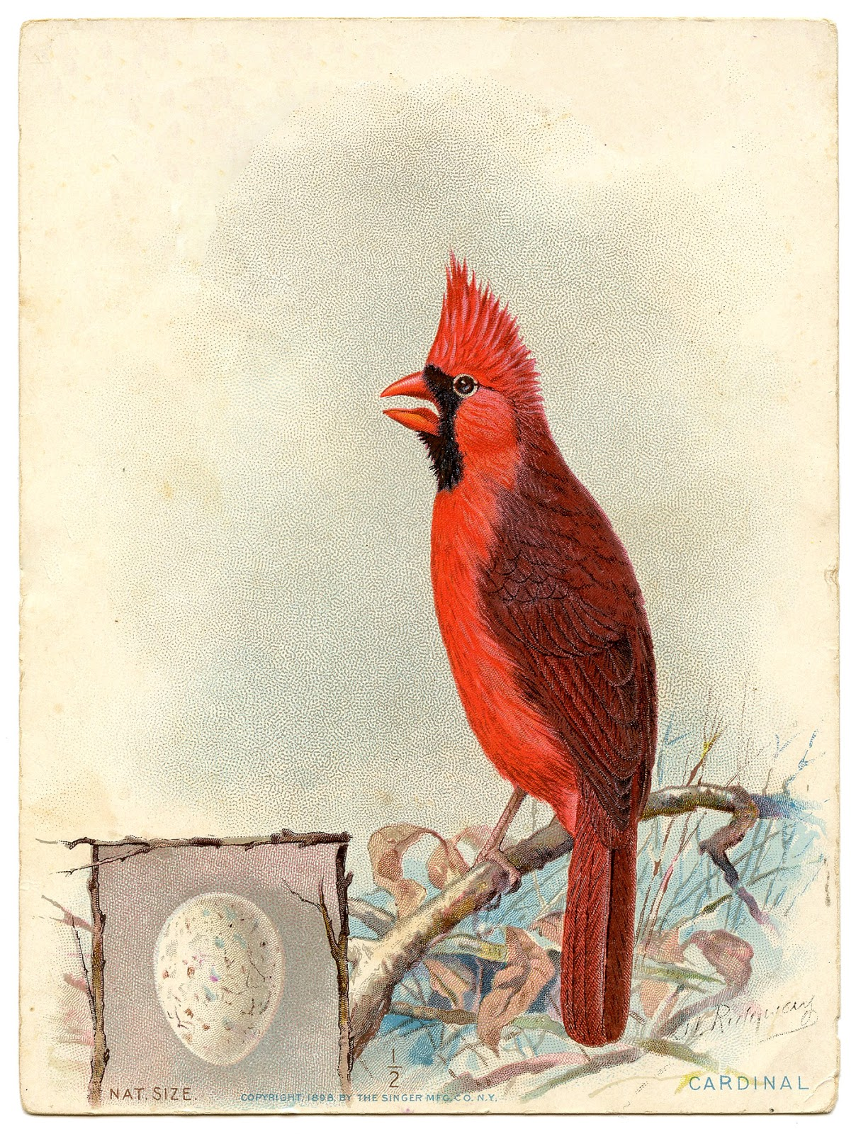 Old Advertising Image Red Cardinal With Egg The