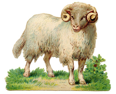 Vintage Sheep Image Curly Horns The Graphics Fairy