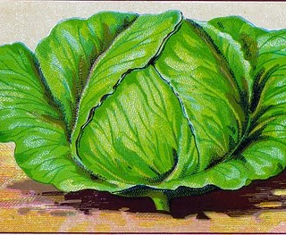 Beautiful Vintage Vegi Images – Cabbage & Carrots
