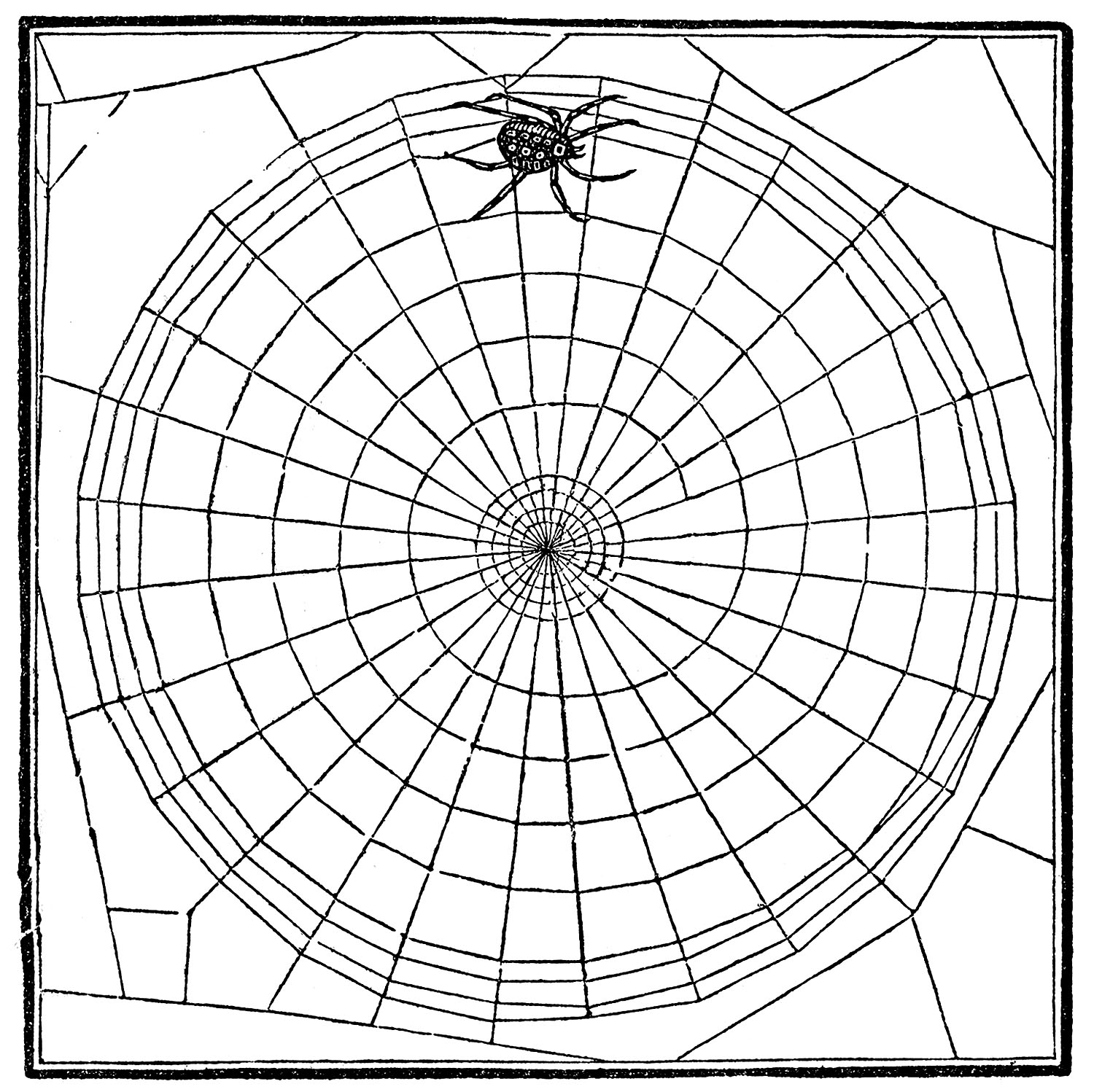 10 Spiders And Spider Web Clip Art
