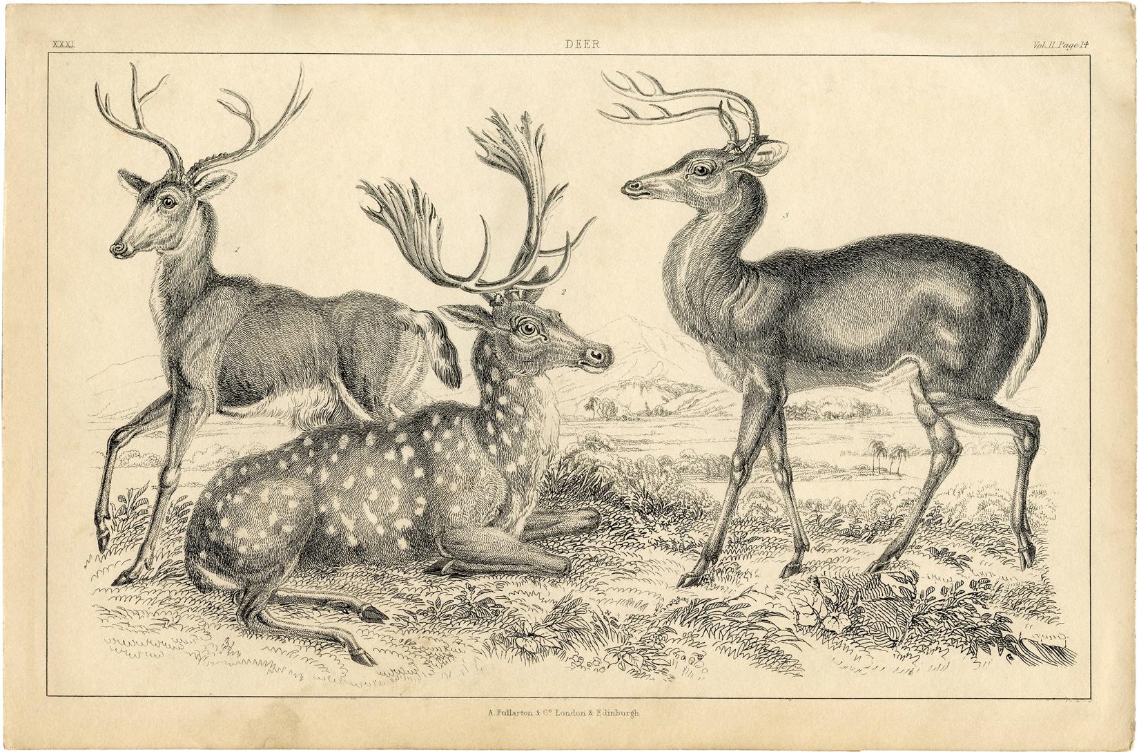 Free Deer Printable