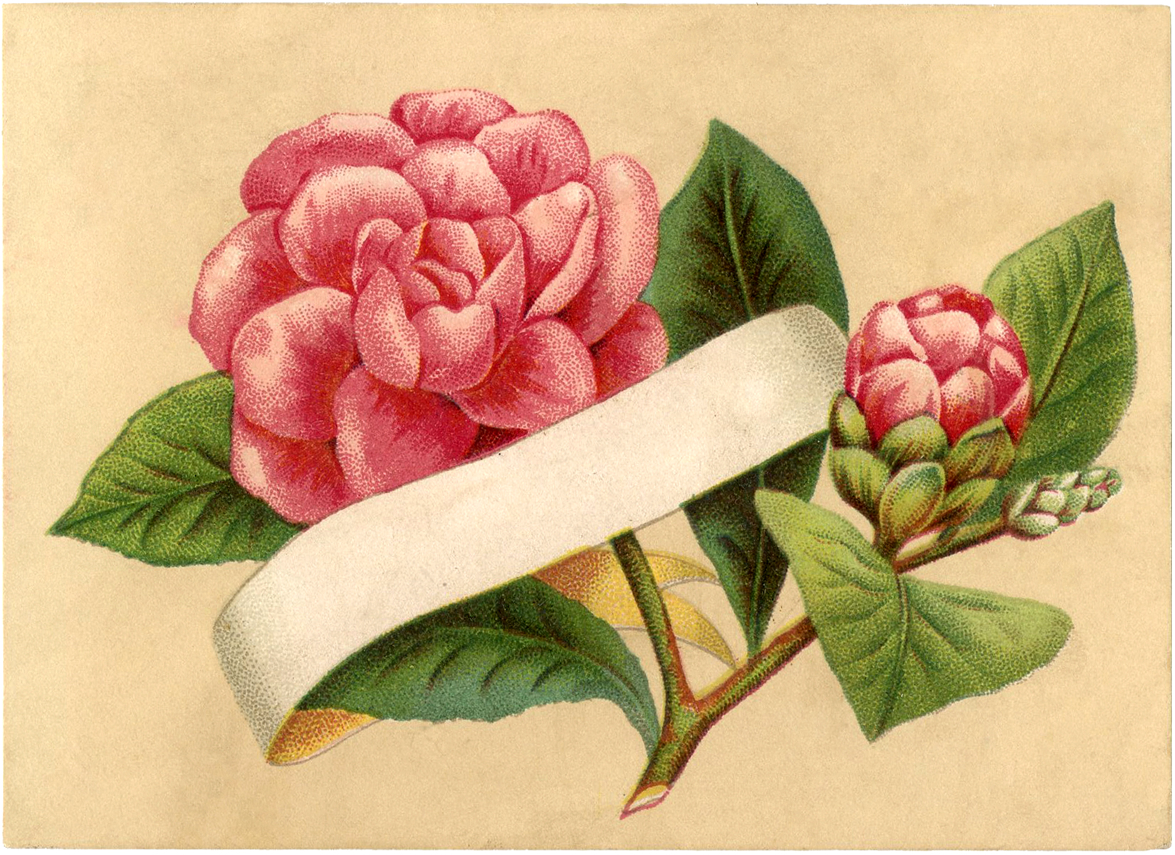 Gorgeous Pink Flower Label Image