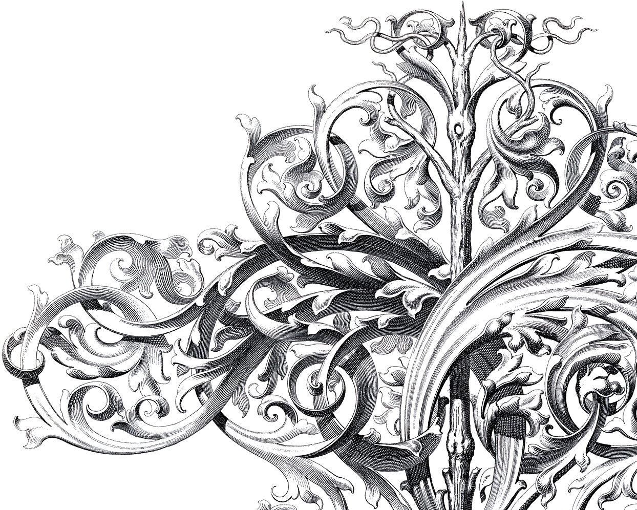 Spectacular Large Scrolls Ornament The Graphics Fairy