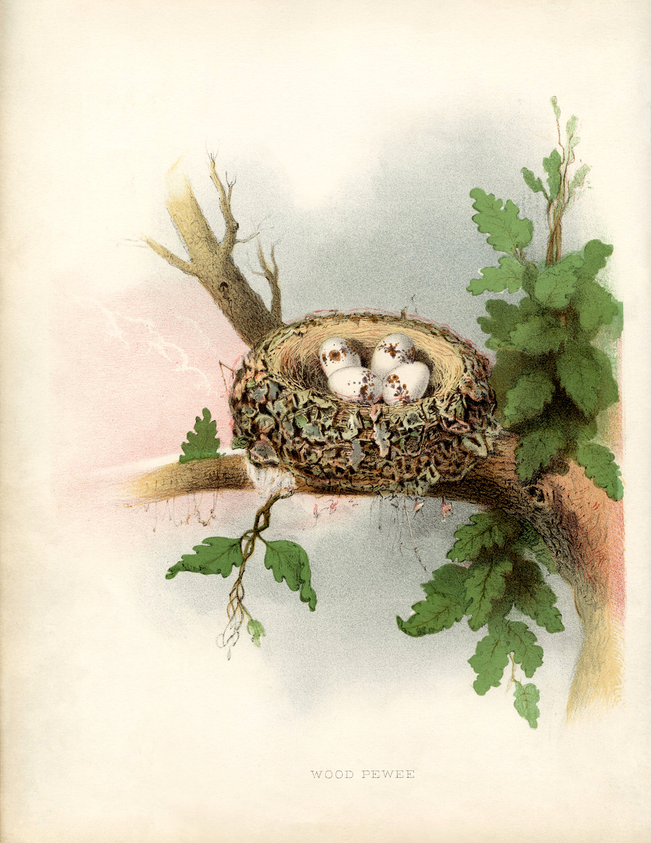 Beautiful Vintage Nest With Eggs Picture