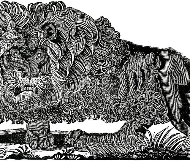 Free Public Domain Lion Image