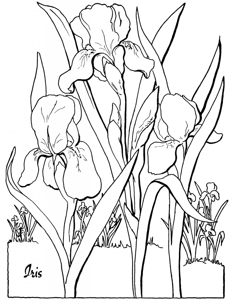 10 Floral Adult Coloring Pages! - The Graphics Fairy | coloring pages for adults printable flowers