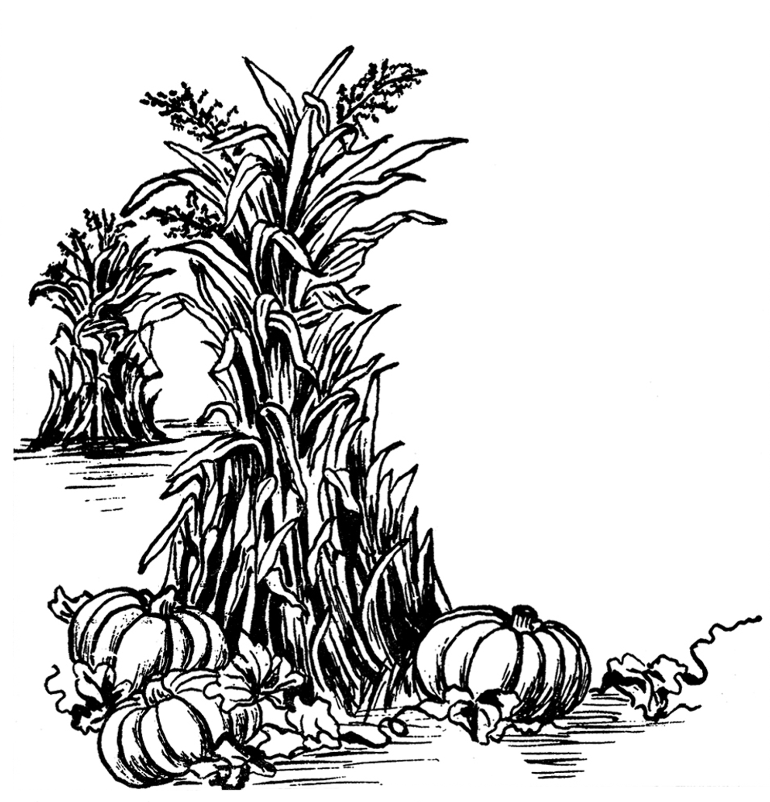 Fall Harvest Clip Art