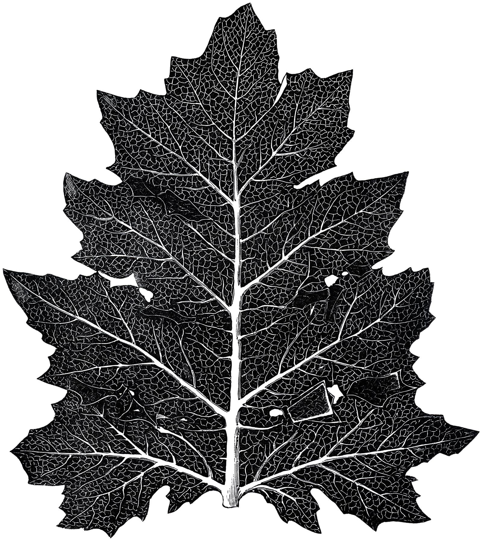 Vintage Leaf Design Download Nice Details The